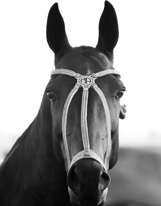 polo horse_black
